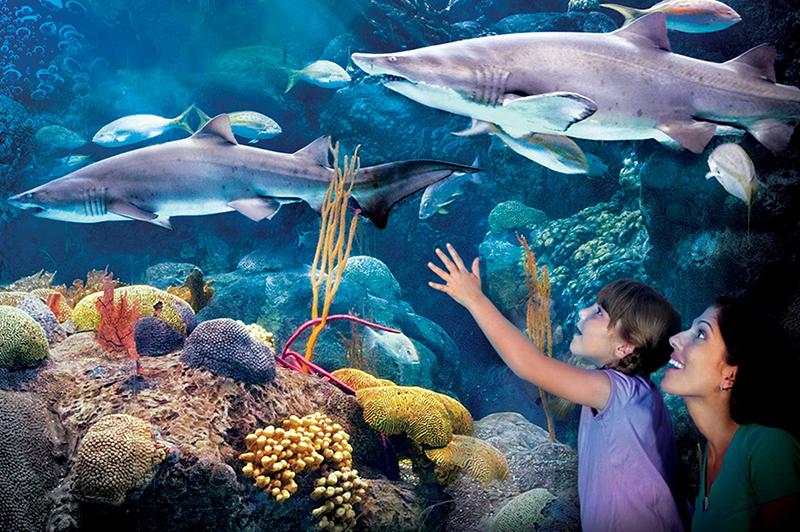 Barrymore Hotel Tampa Florida Aquarium