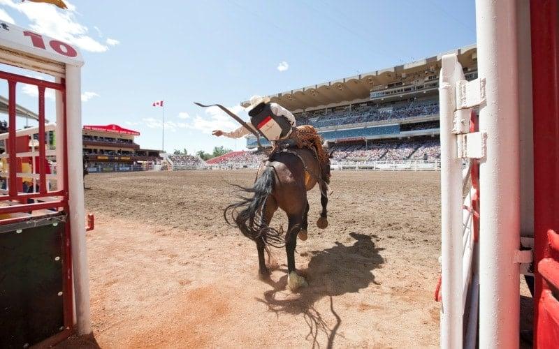 HorseShowCalgary1