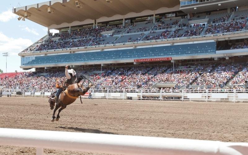 HorseShowCalgary2.jpg
