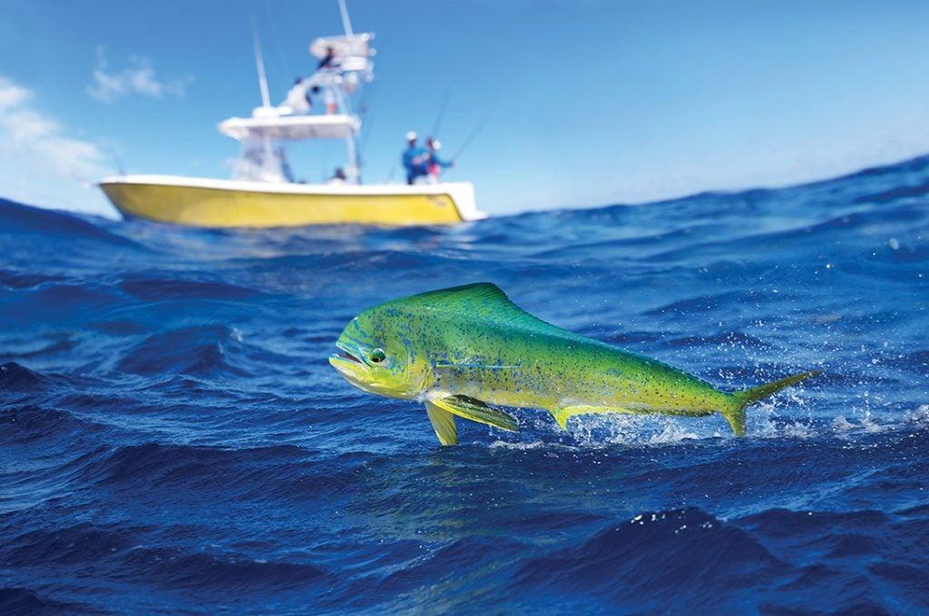 Florida Keys Deep Sea Fishing Boat FK-330